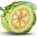 garcinia cambogia best fat burners for women